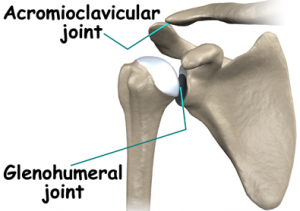 shoulder-joint-and-stem-cells