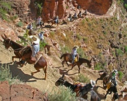 horse back riding in the grand canyon