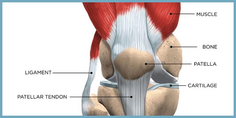 complex knee stem cells