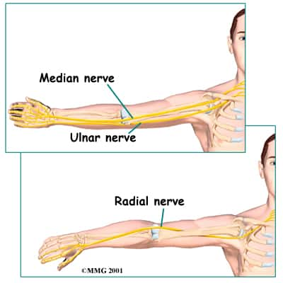 Picture of elbow nerves to explain median neuropathy