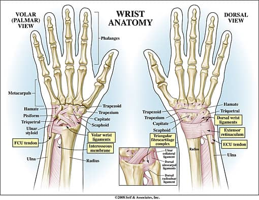 Picture of Wrist Anatomy to explain a lunotriquetral ligament tear